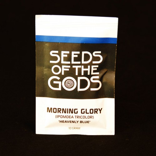 Altered State | Morning Glory